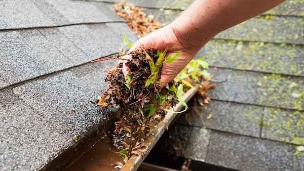 Roof Wellington - Clogged gutters