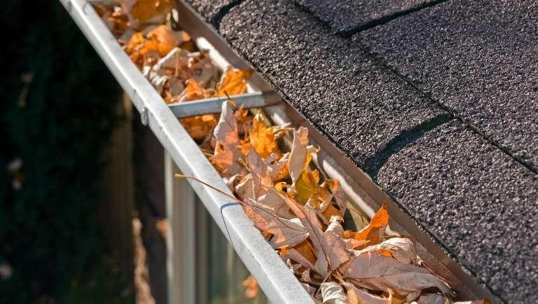 Roof leak investigation offer wellington nz